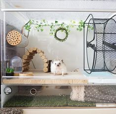 Trendy Hedgehog Pet Names Baby So Cute 65 Ideas Hedgehog Pet Cage, Hedgehog Habitat, Hedgehog Care, Hamster Habitat, Hedgehog House, Baby Hedgehog, Hedgehog Wheel, Hamster Cages, Funny Animal Pictures