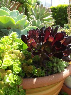 Succulents identification https://www.facebook.com/media/set/?set=a.624875940877860.1073741869.187053574660101&type=3