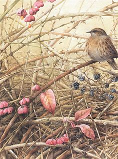 Marjolein Bastin Nature Sketches I love this print, have it hanging above my fireplace.