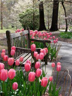 Perfect Place For A Bench Photo: Garden Reverie © 2009 Karen Dorsett #tulips #bench #park