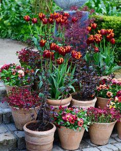 5,507 vind-ik-leuks, 71 reacties - Claus Dalby (@clausdalby) op Instagram: 'Tulip 'Abu Hassen' and Co. #blomster #garden #flowers #clausdalby'