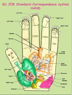 Su-jok terapie - metoda, díky které se můžete zbavit i chronických onemocnění Reflexology Massage, Hand Massage, Self Massage, Accupuncture, Healthy Holistic Living, Acupressure Points, Gym Workout Tips, Spiritual Health, Alternative Health