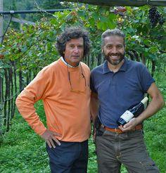 early morning in the  Pinot Noir Vineyards of Filippo Scienza at Vallarom, Vallagarina, Trentino, Italy