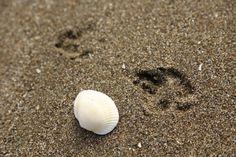 富津海岸 渚に足跡