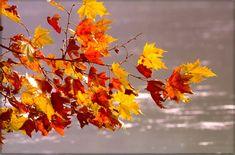 """""""I colori d'autunno"""" è la mostra fotografica e di pittura con rappresentazione dei colori tipici della stagione in corso allestita presso il Museo di Storia Naturale del Salento a Calimera http://www.pugliaglam.tv/eventi/item/808-%E2%80%9Ci-colori-d%E2%80%99autunno%E2%80%9D-mostra-fotografica-e-di-pittura-al-museo-di-storia-naturale-del-salento"""