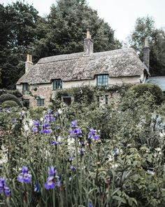 Thomas Hardy's Cottage in Dorset. England Travel, English Cottage, Dorset, Things to see in Dorset, National Trust Garden Cottage, Cozy Cottage, Cottages England, Cotswold Cottages, English Cottages, Dorset Travel, Cottages Scotland, Travel English, Fairytale House