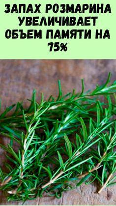 Essential Oils, Herbs, Yummy Food, Health, Garten, Salud, Delicious Food, Health Care, Healthy