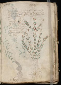 Illustrated with fantastical plants and nude women, the Voynich Manuscript has baffled centuries of experts. Voynich Manuscript, Medieval Manuscript, Codex Seraphinianus, Society Of Jesus, March Bullet Journal, Library Images, Zodiac Symbols, Journal Covers, Vintage World Maps