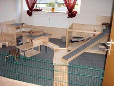 Rabbit needs space to run and play so it is necessary to have a playground for your rabbits. We have curate some ideas of a good rabbit playground here. Indoor Rabbit House, House Rabbit, Bunny Cages, Rabbit Cages, Rabbit Run, Rabbit Toys, Rex Rabbit, Chinchilla, Rabbit Playground