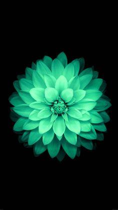 5 fonds d'écran fleuris pour iPhone et iPad