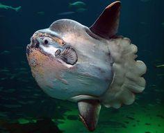 Comment ces créatures des eaux profondes épouvantablement effrayantes peuvent-elles exister