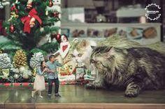 Cats, Animals, Gatos, Animais, Animales, Animaux, Animal, Kitty, Serval Cats