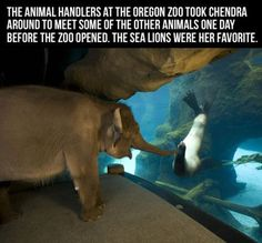 Funny pictures about Just an elephant visiting a sea lion. Oh, and cool pics about Just an elephant visiting a sea lion. Also, Just an elephant visiting a sea lion. Sweet Pictures, Funny Pictures, Funny Pics, Amazing Pictures, Random Pictures, Funny Images, Baby Animals, Funny Animals, Cute Animals