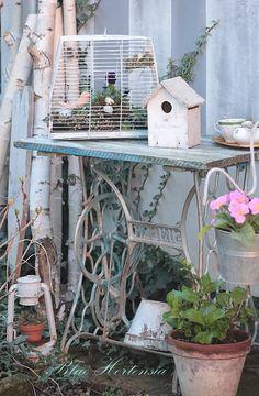 #shabby #garden