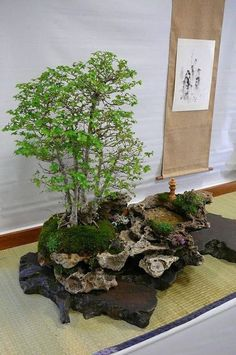 + Plantas: A Arte Milenar do Penjing - Micropaisagismo Natural #bonsai