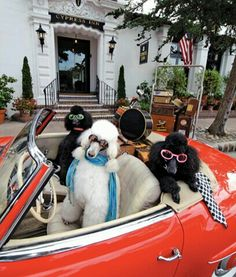 On the Go Diva Poodles ❤for auntie Sharon  Get in loser were going shopping