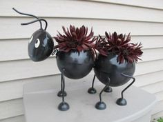 This is a metal ant container planted with two S. 'Oh My' sempervivum