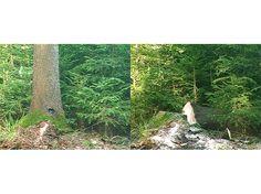 video still of: Copa & Sordes, Baum fällt, video, 2:30 min, 2005 | photo: Copa & Sordes