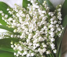 Lilies of the Valey