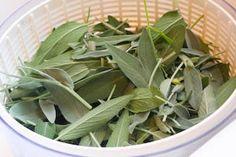 Kalyn's Kitchen: More About Freezing Fresh Herbs: Freezing Thai Basil, Sage, Tarragon, and Mint