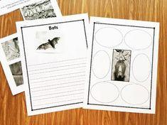 Bats Kindergarten Book and Activities4