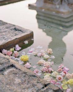 Flowers in the fountain | carriekingphotographer