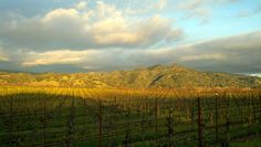Alexander Valley--My family and I have driven through here many times for picnics and road tripping.
