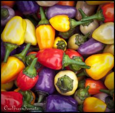 Chinese 5 color peppers
