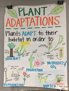 Image 5 - A plant adaptations anchor chart that will teach children what are some things plants adapt to and increase their content knowledge about plants. Second Grade Science, Middle School Science, Elementary Science, Science Classroom, Teaching Science, Science Activities, Science Projects, Science Experiments, Science Anchor Charts 5th Grade