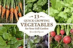 13 quick growing fall vegetable gardens