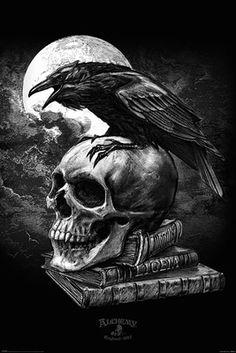 Alchemy Gothic - Fantasy Poster/Print (Edgar Allan Poe's Raven & Skull) (Size: 24 inches x 36 inches) Gothic Wallpaper, Skull Wallpaper, Dark Fantasy Art, Dark Gothic Art, Gothic Drawings, Gothic Artwork, Art Noir, Dark Art Tattoo, Gothic Tattoo