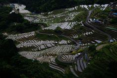 Maruyama 1000 piece rice (Mie Prefecture) 「日本の棚田百選」の一つで、熊野市紀和町の山あいにある丸山千枚田 http://teru172.com/A10/maruyama/tanada.html