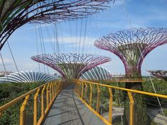 Supertrees at Gardens by the Bay, Singapore Gardens By The Bay, Fair Grounds, Wings, Travel, Album, Singapore, Asia, Travel Tips, Voyage