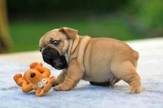 This pup who JUST CAN'T WITH THIS TOY. | 33 Dogs That Cannot Even Handle It Right Now