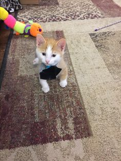 Pumpkin is such a playful little guy. Loves his picture taken. You would never have known he was a feral rescue.