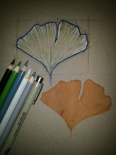 Gingko biloba... KOH-I-NOOR Mondeluz aquarell coloured pencils, black pen and SAKURA Pigma brush marker #ginkgo #leaf #geometric #tattoodesign