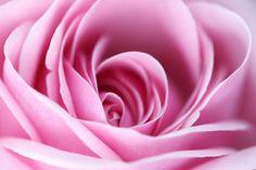 Fototapete Rosa Rosa 309 cm x 400 cm East Urban Home Blue Sky Wallpaper, Geometric Wallpaper Murals, Wallpaper Panels, Wallpaper Roll, Wall Wallpaper, Tube Carton, Elephant Parade, Pastel Roses, Rosa Rose