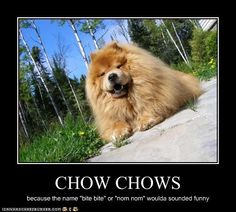 "I love chow chows! #ProudChowMama gonna start calling my fur baby ""bite bite"" lol"