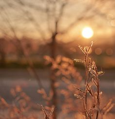 """""""Once in a golden hour, I cast to earth a seed, and up there grew a flower, that others called a weed.""""  ~ Alfred Tennyson"""