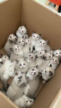 cute cats Baby Animals Pictures, Cute Animal Photos, Cute Animal Videos, Funny Cute Cats, Cute Cats And Kittens, Cute Funny Animals, Kittens Cutest Baby, Silly Cats, Funny Pets