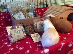 LAST CHANCE #BunnyBox is piggie safe Last chance to treat your cavy to an awesome box >>  <<