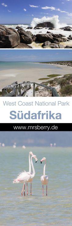 West Coast National Park in Südafrika | MrsBerry Reisetipps für eine Südafrika Rundreise | Etwa 100 Kilometer nördlich von Kapstadt liegt der West Coast National Park. Meine kleine blaue Lagune. Mein Stück vom Paradies.