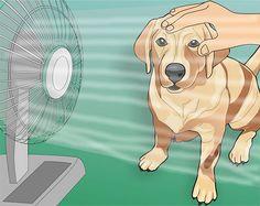 How to Treat Heat Stroke in Dogs: 7 Steps