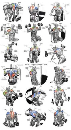 Workout Exercise Shoulder workouts to target specific muscle. - The Ultimate Shoulder Workouts Anatomy. We've put together this graphic of different types shoulder workouts. Knowing the anatomy of each muscle group is Fitness Workouts, Weight Training Workouts, Gym Workout Tips, Biceps Workout, Fitness Motivation, Sport Motivation, Traps Workout, Deltoid Workout, Workout Routines