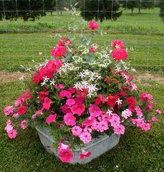 Container garden - Gardening Go