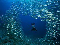 Dive in Galápagos