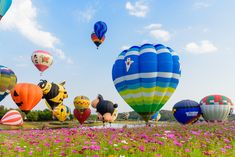 Things to do in Chiang Rai, Thailand: Singha Park International Balloon Fiesta Rest Of The World, Places Around The World, Around The Worlds, Chiang Rai Thailand, Stuff To Do, Things To Do, Northern Thailand, Best Tea, Sunrise