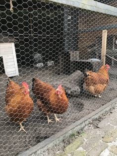 Love my chickens