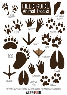 Know your animal tracks here! #animaltracks #survivalskills #prepperskills #survival #preparedness #survivallife Survival Blog, Survival Life, Wilderness Survival, Survival Skills, Wild Animals Attack, Animal Attack, Carlito's Way, Outdoor Shelters, Grasshoppers