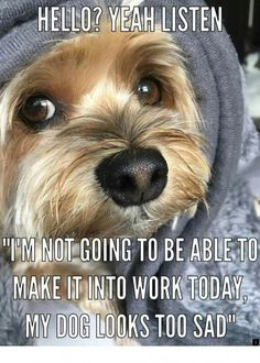 Yorkshire Terrier – Energetic and Affectionate Yorshire Terrier, Silky Terrier, Bull Terriers, Yorkshire Terrier Haircut, Yorkshire Terrier Puppies, Cute Puppies, Cute Dogs, Poodle Puppies, Awesome Dogs